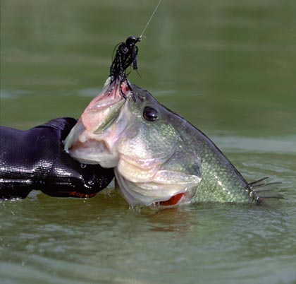Arkansas 39 top lunker lakes for Fishing in arkansas
