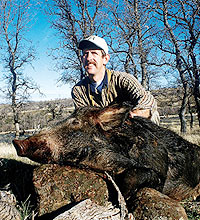 Ready for one of the best wild pig seasons ever? Experts from throughout the state say they've got pigs, pigs everywhere! (January 2006)