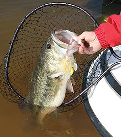 The locals are catching more fish at Elsinore, Perris and Skinner lakes. Here's why, and how they do it. (March 2010)