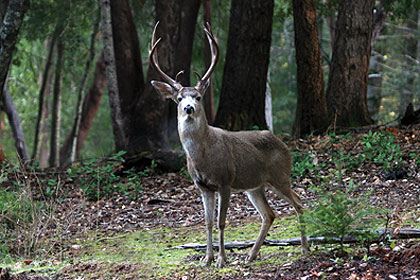 If you know how California deer hunters fared last year, then you're one step closer to success this year in the Golden State. (July 2010)
