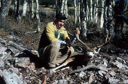 If you go hunting mule deer this season, be prepared to hunt hybrids because the blacktails are definitely moving in.  (November 2006)