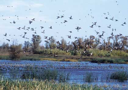 "Look ahead for a ""golden"" season of waterfowling in the Golden State. (November 2006)"