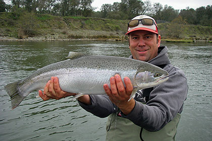 The 23-mile-long American River is an unlikely steelhead stream. But some sections have world-class holding water that hides chromers to 15 pounds.  (December 2009)