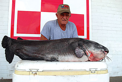 A new state-record blue catfish was caught last year in West Florida. But it was not the only big whiskerfish to turn up in that part of the state! (June 2009)
