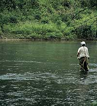 Fly fishing north georgia mountains for Fly fishing north georgia