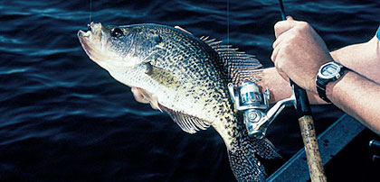 From the Tennessee border to the Florida line, Georgia is loaded with great crappie waters. Here's a look at the best prospects for papermouths this year! (April 2006)
