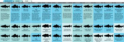 Colorado's 2011 Fishing Calendar