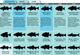 Florida 2011 Fishing Calendar