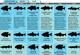 Indiana 2011 Fishing Calendar