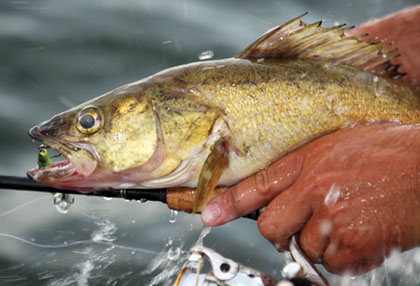 If you are eager for angling action, then don't pass up a chance to hit any of these walleye hotspots this spring.