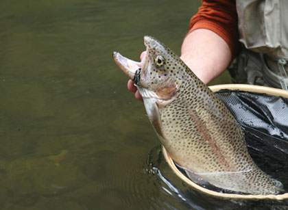 Pennsylvania 39 s 2011 spring trout fishing outlook for Nd game and fish stocking report