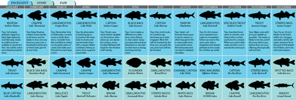 South Carolina's 2011 Fishing Calendar
