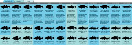 Tennessee's 2011 Fishing Calendar
