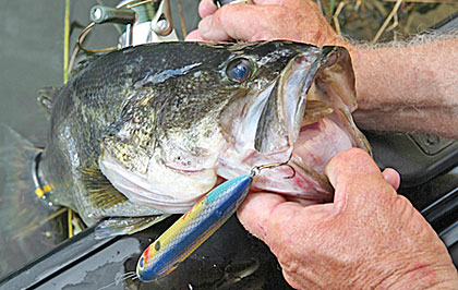 Depending on the weather, April can have bass heading in to spawn, bedding or leaving the spawning flats. Here's how to figure out what's happening and how to fish those conditions.