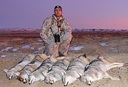 Your deer-hunting skills will take you a long way towards predator-hunting success.