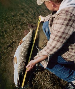 Ice-out pike fishing: your best bet in the Dakotas for taking a real wallhanger. Prime time: right now. Read on to find out where and how to get in on your share of the excitement. (March 2007)