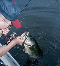 Late spring tips and tactics made for taking your bass fishing to a higher level -- right up to the surface!