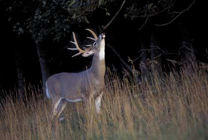 Changes in Kansas' deer regulations for the coming season will affect resident hunters and non-residents alike. Here's how they'll influence your hunting. (July 2008)