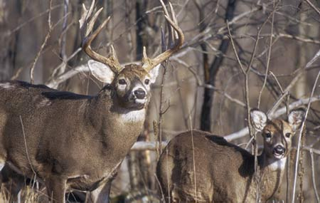If you measure a successful deer season by the number of tags that you fill and the amount of meat in your freezer, then here's where in the Great Plains you should concentrate your hunting efforts this fall. (October 2007)