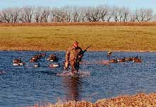 Nebraska waterfowlers eager to sample some late-season action would do well to heed this advice from some of the state's most dedicated duck hunters. (Dec 2006)
