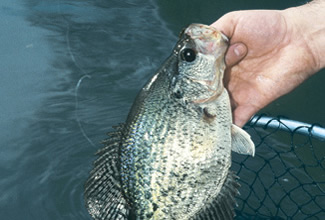 The best of iowa crappies for Fishing in iowa