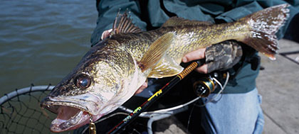 Although Iowa's Upper and Middle Raccoon rivers, along with the North and South Skunk, aren't prime destinations for walleyes, locals know that there's still some good fishing to be had. (May 2006)