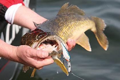 39 eyes on iowa for Walleye fishing in iowa