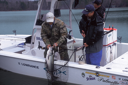 If you are one of those people who never put the boat away, then tow your rig to these waters for hot striped bass action right now! (January 2007)