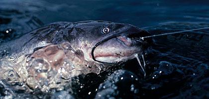 Floating Illinois' Best Catfish Rivers