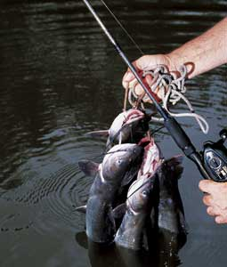 Sure, it's easy to mosey on down to the pond to catch some fiddlers. But this year, why don't you do yourself a favor by trying the best channel catfishing our state has to offer on these waters? (June 2007)
