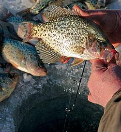 Indiana's 2010 Fishing Calendar