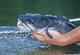 Indiana's Capital Catfishing
