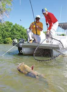 3 Big-River Catfish Picks In Our State