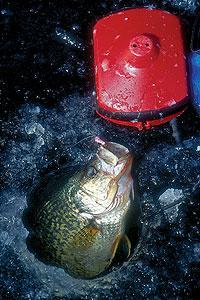 5 plus indiana hardwater hotspots for Ice fishing indiana