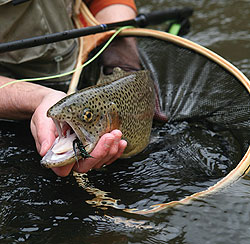 Kentucky's Trout Put-And-Take Tailwater