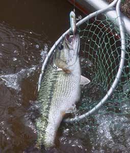 A True Tale Of Three Kentucky Bass Waters