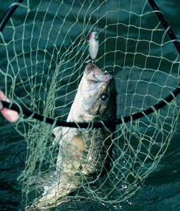 What will the bassin' be like in the Bayou State this year? Read on and find out. (February 2007)