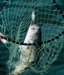 Louisiana's 2007 Bass Forecast