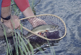 Our Finest Trout Fishing