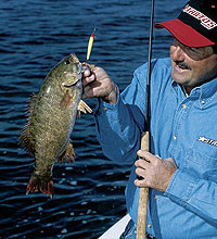 When most people think of Lake Erie, Lake St. Clair and the Detroit River, walleyes usually come to mind. But these waters are also home to hard-charging smallmouth bass that are easy to catch!