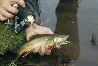 Our finest trout fishing for Best fishing in minnesota
