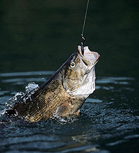 Our Super Smallmouth Waters