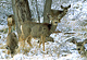 Minnesota Deer Harvest Climbs Almost 7 Percent in 2010