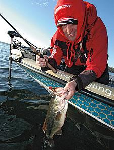 Northern Bass, Southern Bass