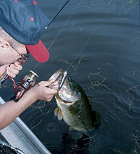 The vast waters of Lake of the Ozarks offer both quantity and quality to largemouth anglers. Here are a few of the best options.