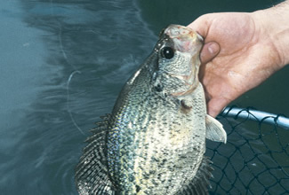 Once the crappie finish spawning, most anglers forget about them until the following year. But the fish aren't that hard to find after they leave the beds - or to catch!