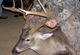 Several changes took place in Mississippi deer hunting last season. How did they work out -- and what do they promise for the future? Let's take a closer look. (July 2007)