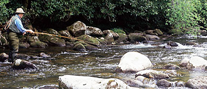 Paradise In The Park: 5 Great Trout Streams