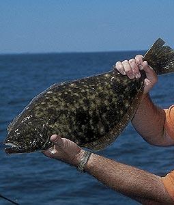 5 Favorite Saltwater Game Fish In Carolina