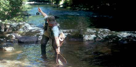 With thousands of miles of trout water, North Carolina is a trout angler's paradise.